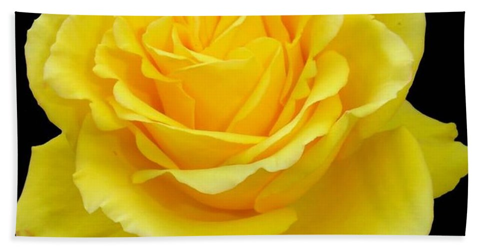 Beautiful Yellow Rose Flower On Black Background Beach Sheet For