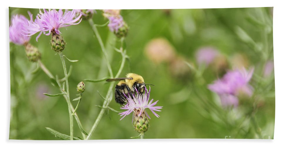 Thistle Beach Towel featuring the photograph Bee And Thistle by David Arment