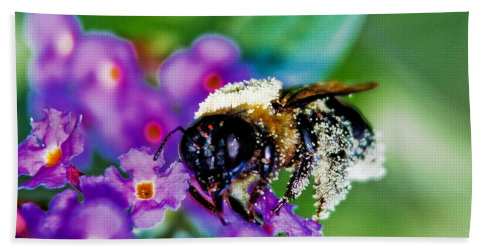 Bee Beach Towel featuring the photograph Super Bee Covered With Pollen by Carol F Austin