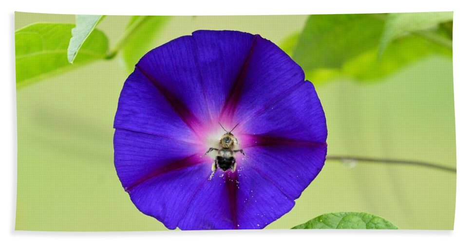 Morning Glory Beach Towel featuring the photograph Bee Nirvana by Thomas Phillips