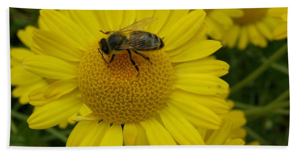 Bee Beach Towel featuring the photograph Bee On Daisy by Bev Conover