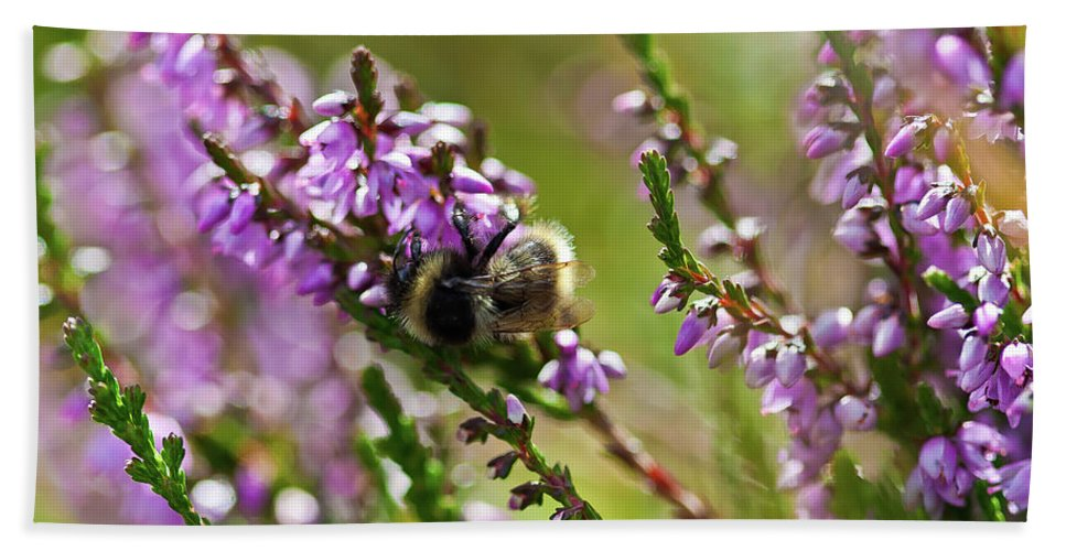 Animal Beach Towel featuring the photograph Bee On Heather by Roberto Pagani