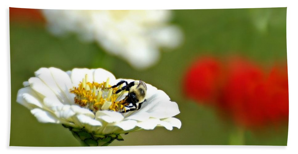 Bee Beach Towel featuring the photograph Bee Red-y by Diana Angstadt