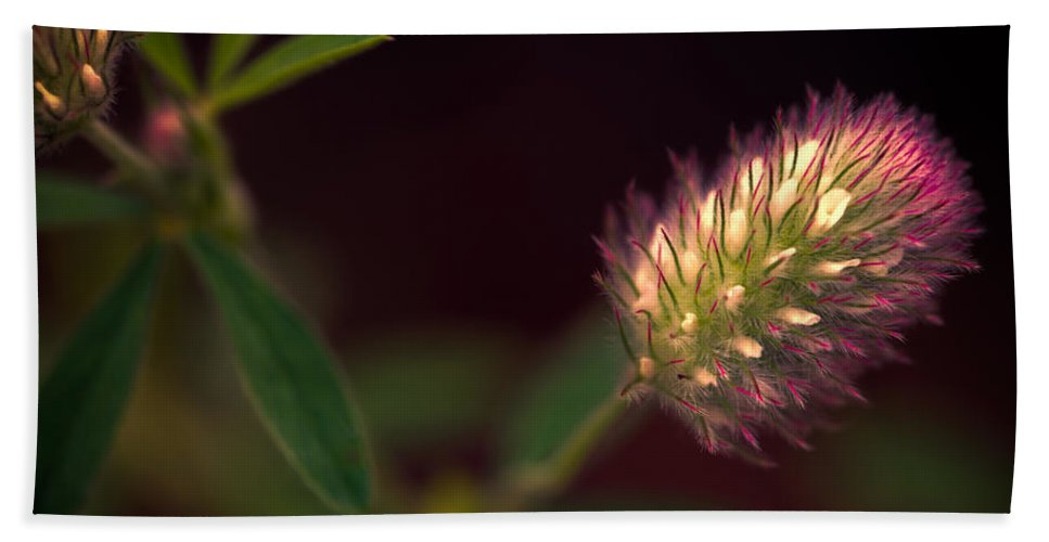 Flower Beach Towel featuring the photograph Below The Flower Line by Bob Orsillo