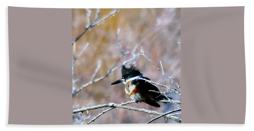 Birds Beach Towel featuring the photograph Belted Kingfisher by Jeff Swan