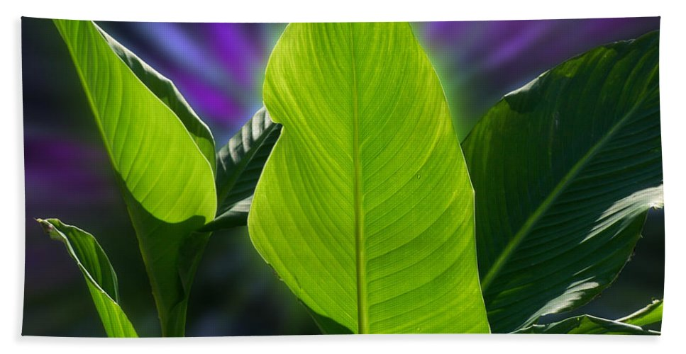 Floral Beach Towel featuring the photograph Big Leaves by Thomas Woolworth