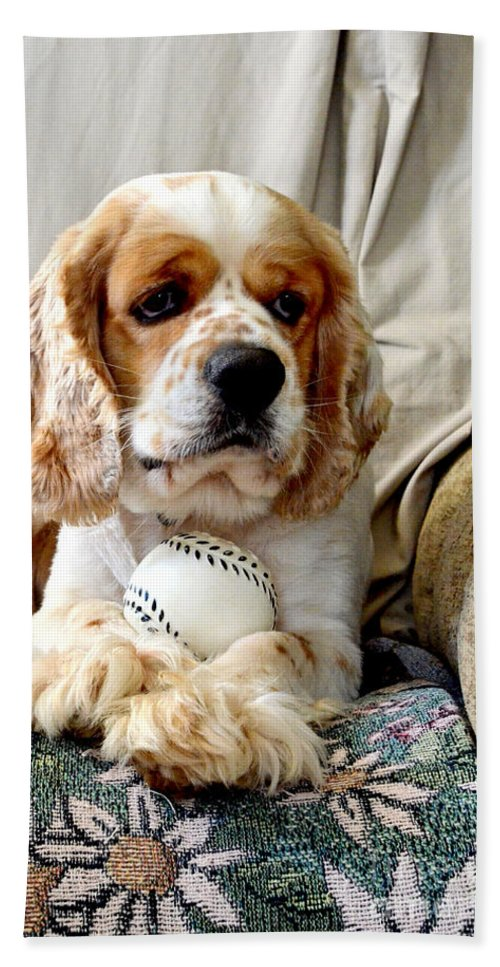 Animals Beach Towel featuring the photograph Bingo And His Ball by Debbie Portwood