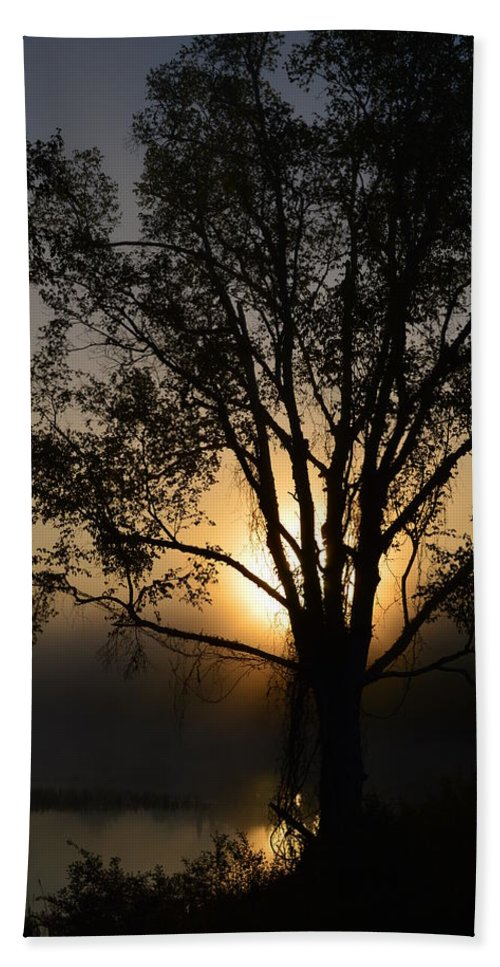 Sunrise Beach Towel featuring the photograph Birch In Silhouette by Thomas Phillips