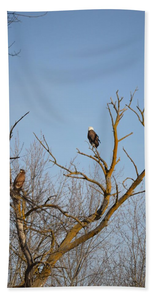 Bald Eagle Beach Towel featuring the photograph Birds Of Prey II by Bonfire Photography