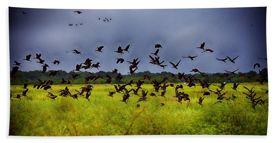 Birds Beach Towel featuring the photograph Birds Of The Wetlands V11 by Douglas Barnard