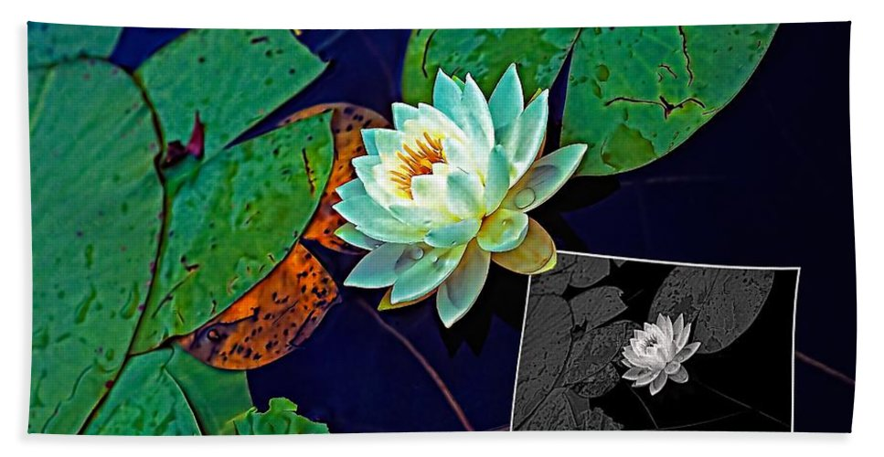 Water Lily Beach Towel featuring the photograph Birth Of An Image by Steve Harrington