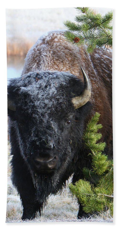 Big Game Beach Towel featuring the photograph Bison by David Andersen