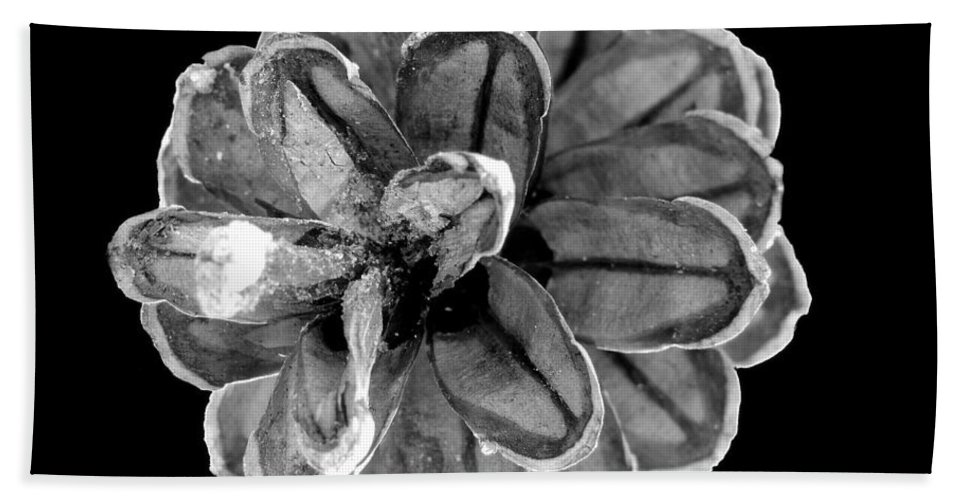 Pinecone Beach Towel featuring the photograph Black And White by Mim White