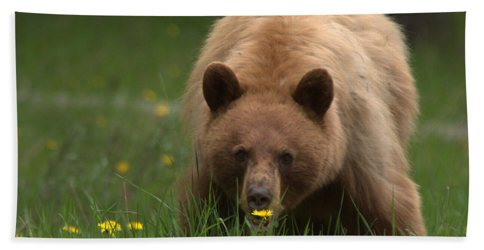 Bear Beach Towel featuring the photograph Black Bear by Frank Madia