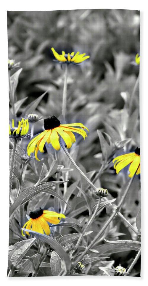 Blackeyed Susan Beach Towel featuring the photograph Black-eyed Susan Field by Carolyn Marshall