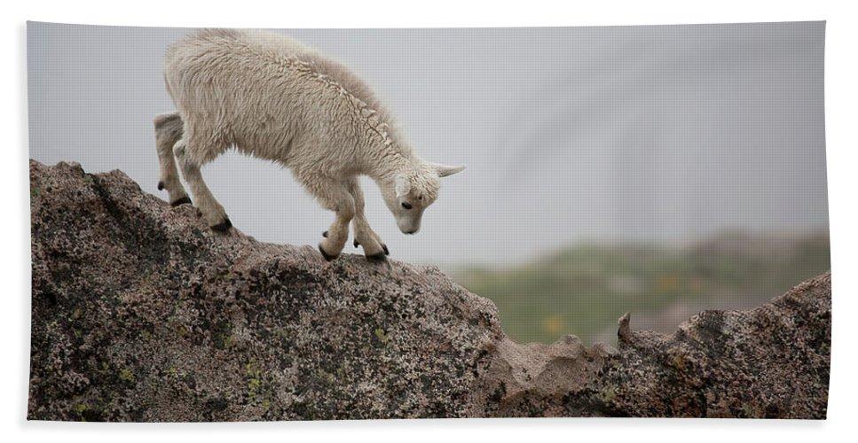 Mountain Goat Beach Towel featuring the photograph Blade Runner by Jim Garrison