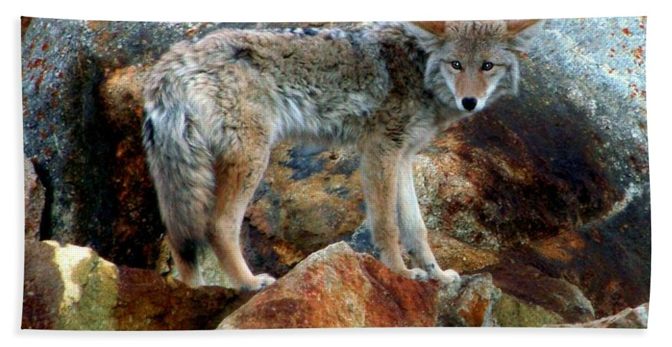 Coyotes Beach Towel featuring the photograph Blending In Nature by Karen Wiles