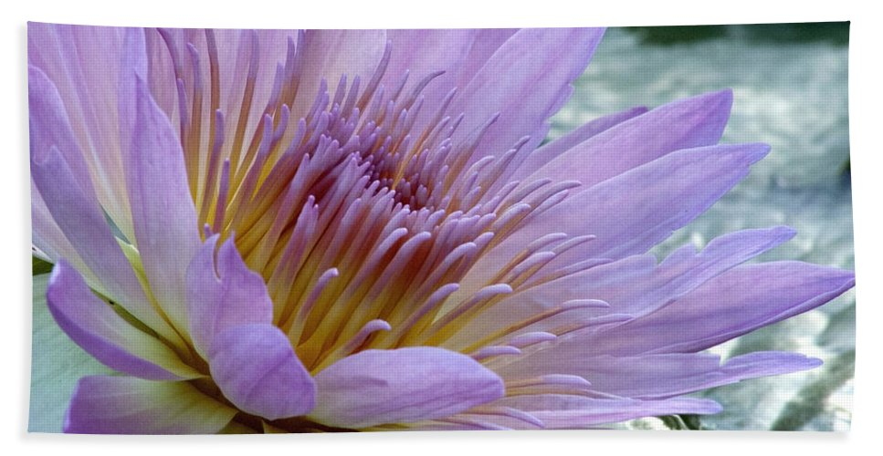 Lily Pad Beach Towel featuring the photograph Bloom's Blush by Alycia Christine