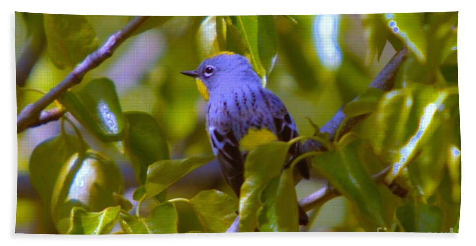 Birds Beach Towel featuring the photograph Blue Bird With A Yellow Throat by Jeff Swan