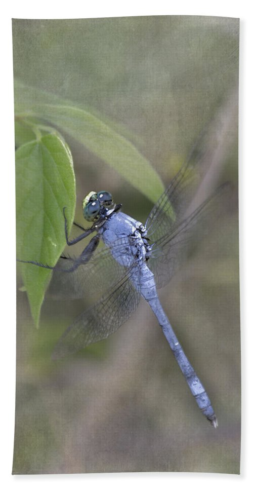 Blue Dasher Beach Towel featuring the photograph Blue Dasher Dragonfly by TN Fairey