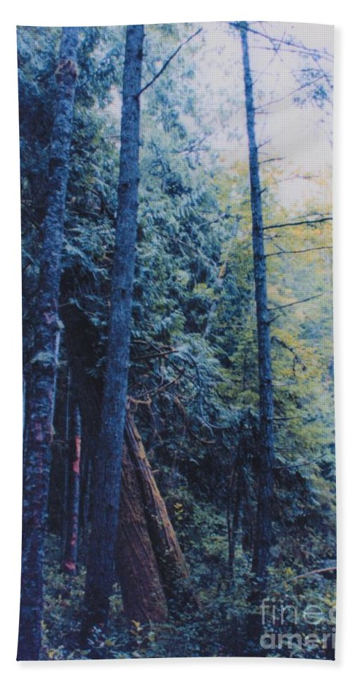 First Star Beach Towel featuring the photograph Blue Forest By Jrr by First Star Art
