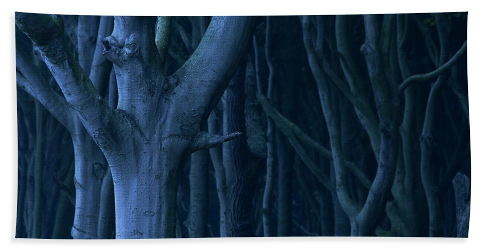 Nature Beach Towel featuring the photograph Blue Forest by Heiko Koehrer-Wagner