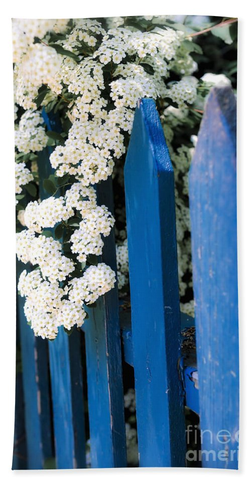 Fence Beach Towel featuring the photograph Blue Garden Fence With White Flowers by Elena Elisseeva