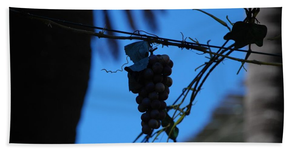 Grappes Beach Towel featuring the photograph Blue Grapes by Dany Lison