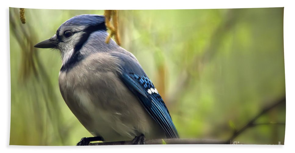 Bird Beach Towel featuring the photograph Blue Jay On A Misty Spring Day by Lois Bryan