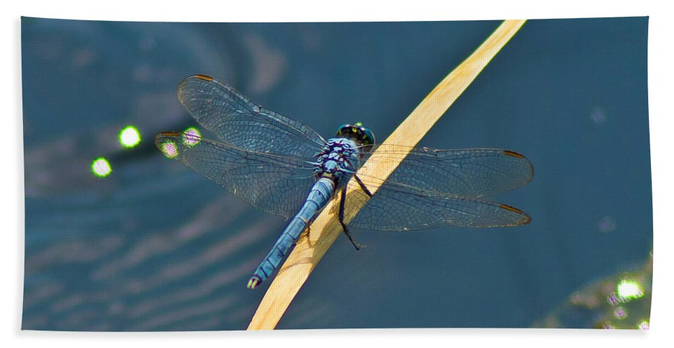 Blue Beach Towel featuring the photograph Blue On Blue by Stephen Whalen