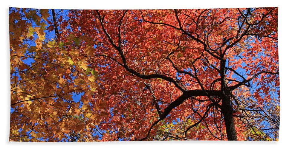 Blue Ridge Beach Towel featuring the photograph Blue Ridge Mountains Fall Foliage by Mountains to the Sea Photo