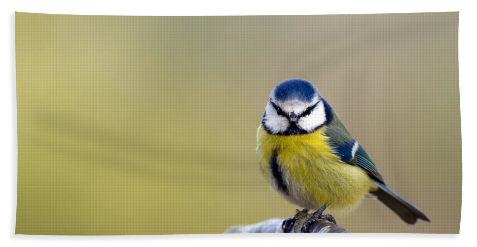 Blue Tit Beach Towel featuring the photograph Blue Tit by Torbjorn Swenelius