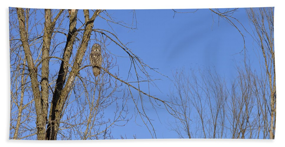Great Grey Owl Beach Towel featuring the photograph Blue With A Gray by Joshua McCullough