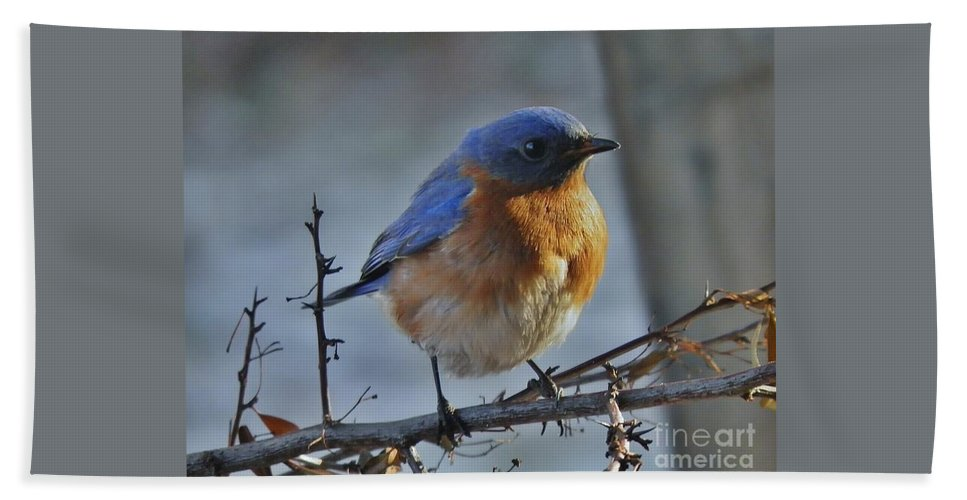 Bluebird Beach Towel featuring the photograph Bluebird In The Snow. by Earl Williams Jr