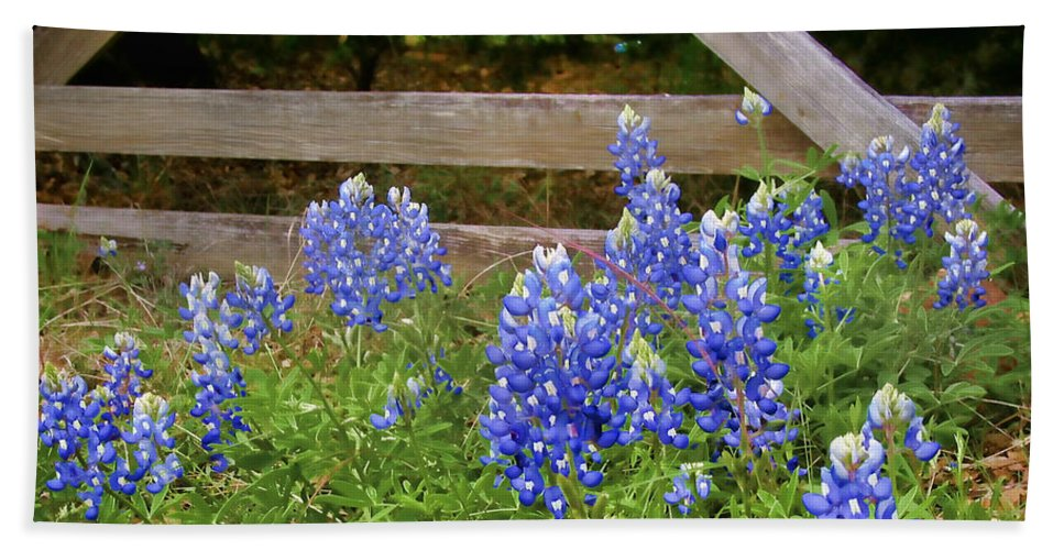 Bloom Beach Towel featuring the photograph Bluebonnet Gate by David and Carol Kelly