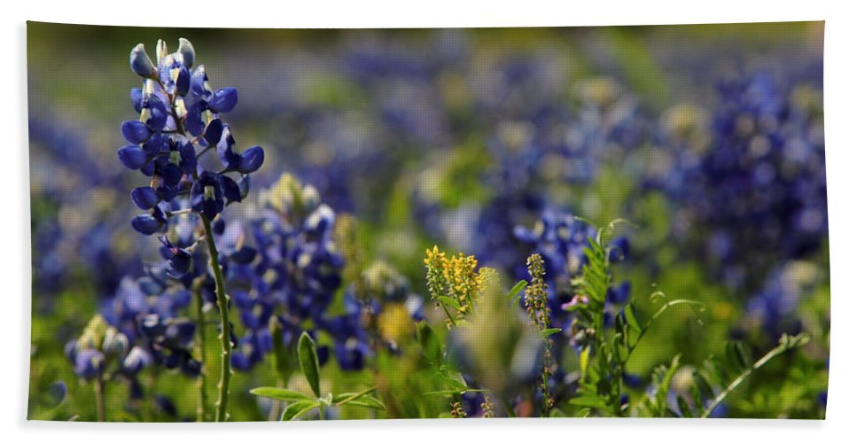 Bluebonnets Beach Towel featuring the digital art Bluebonnets In Spring by Linda Unger