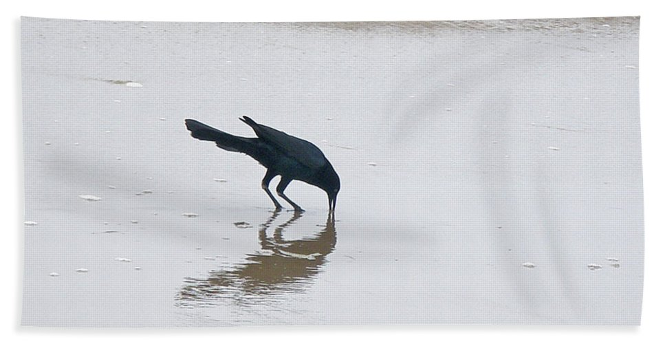 Grackle Beach Towel featuring the photograph Boat-tailed Grackle - Quiscalus Major - In Surf by Mother Nature