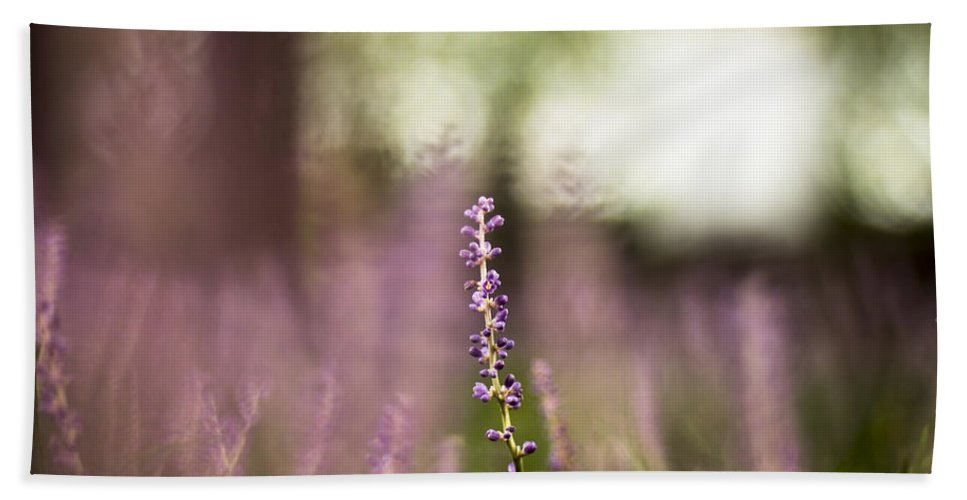 Bokeh Beach Towel featuring the photograph Bokeh With Purple Wildflower by Jorge Perez - BlueBeardImagery