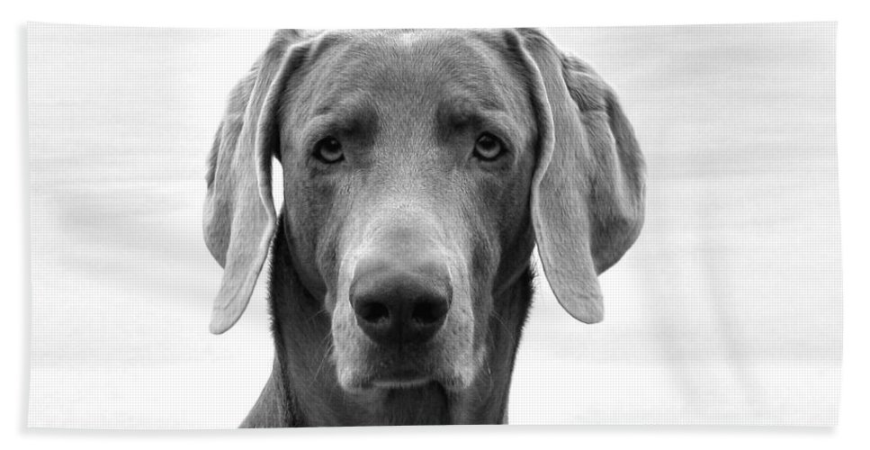 Weimaraner Beach Towel featuring the photograph Published Book Cover Of Quotable Dogs by Art Dingo