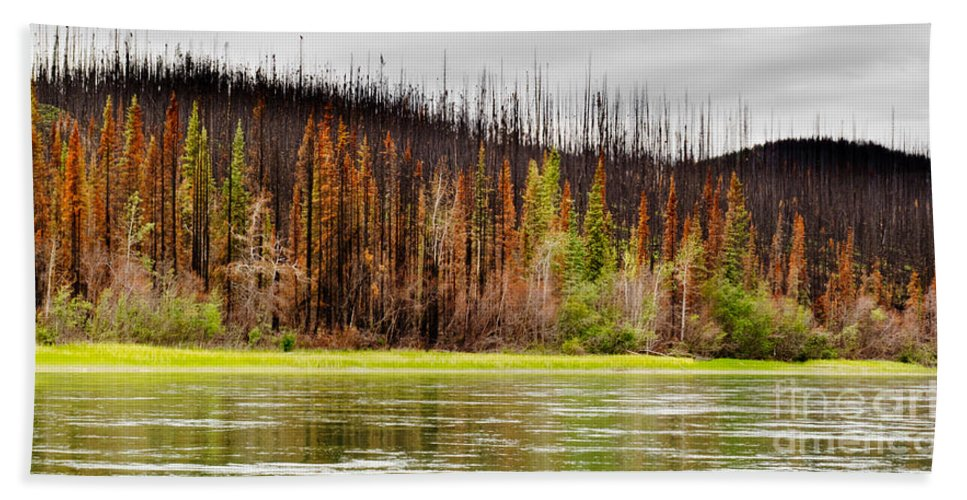 Bank Beach Towel featuring the photograph Boreal Forest At Yukon River Destroyed By Fire by Stephan Pietzko