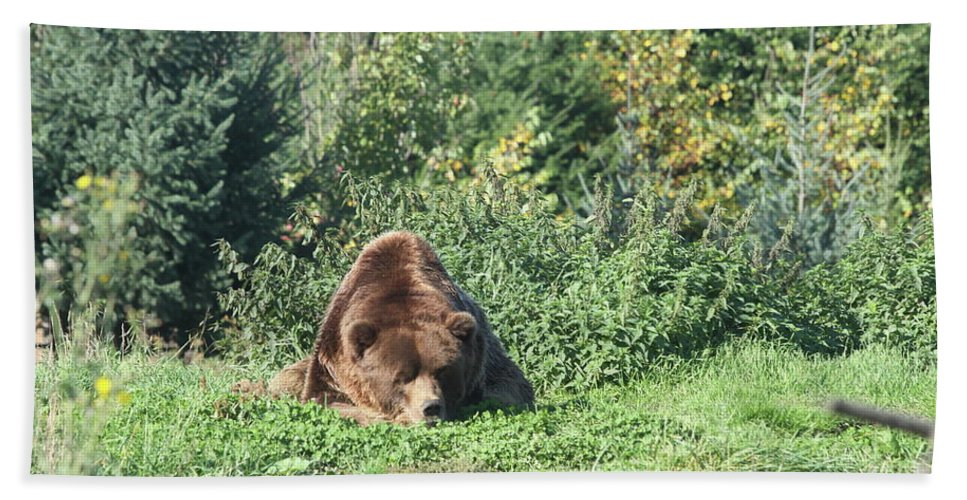 Brown Bear Beach Towel featuring the photograph Boring by Christiane Schulze Art And Photography