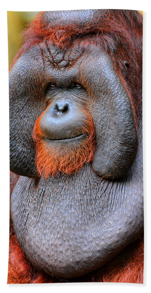 Bornean Orangutan Iv Beach Towel For Sale By Lourry Legarde