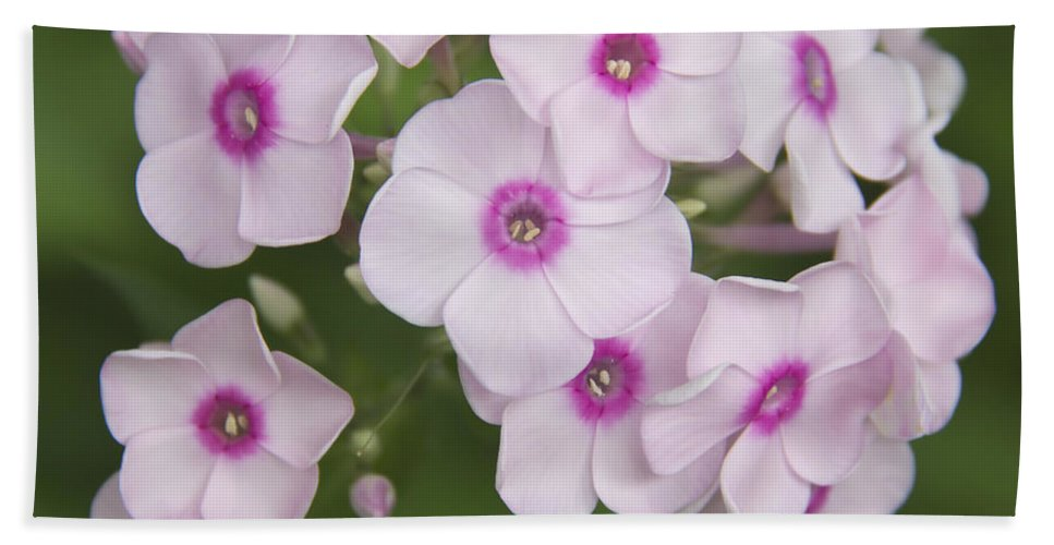 Phlox Beach Towel featuring the photograph Bright Eyes Squared by Teresa Mucha