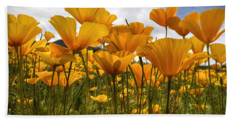 Poppies Beach Towel featuring the photograph Bring On The Poppies by Saija Lehtonen