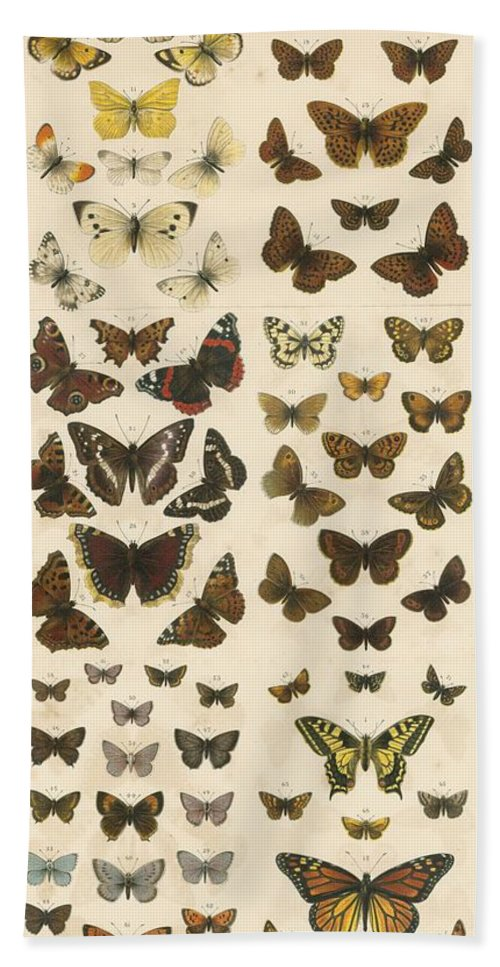 Educational; British Butterflies; Butterfly; Entomology Beach Towel featuring the painting British Butterflies by English School