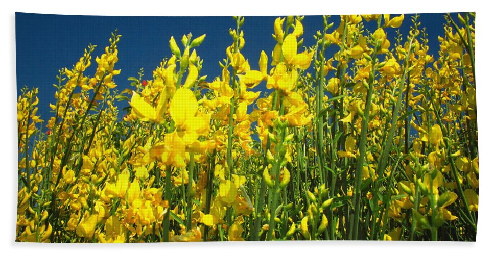 Floral Beach Towel featuring the photograph Broom And Carpenter Bee by Joyce Dickens