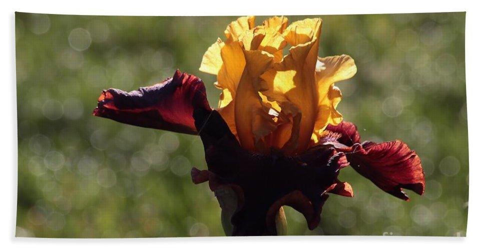 Iris Beach Towel featuring the photograph Brown And Yellow Iris by Kenny Glotfelty