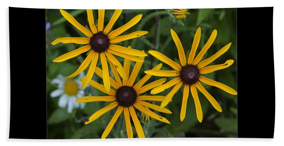 Brown Eyed Susan Beach Towel featuring the photograph Brown Eyed Girl by John Stephens