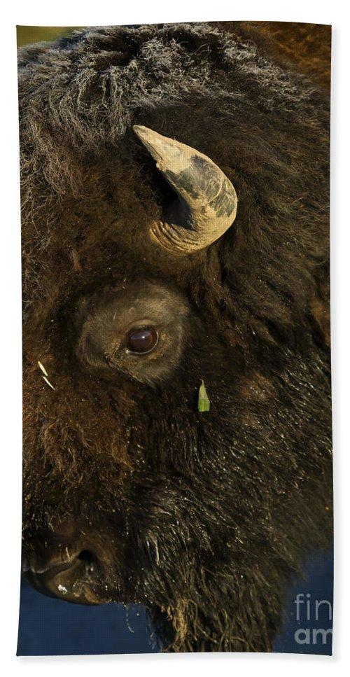 Buffalo Beach Towel featuring the photograph Buffalo  #5601 by J L Woody Wooden
