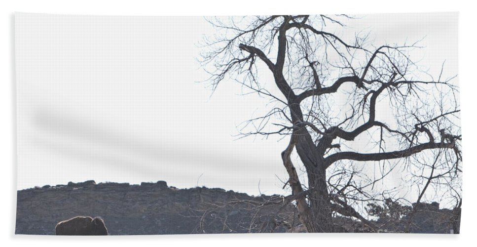 Buffalo Beach Towel featuring the photograph Buffalo Breath In The Winter Air by James BO Insogna